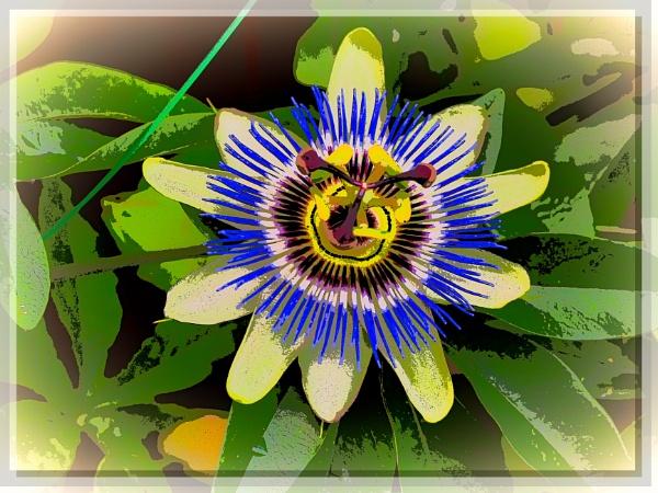 PASSION FLOWER by kojack