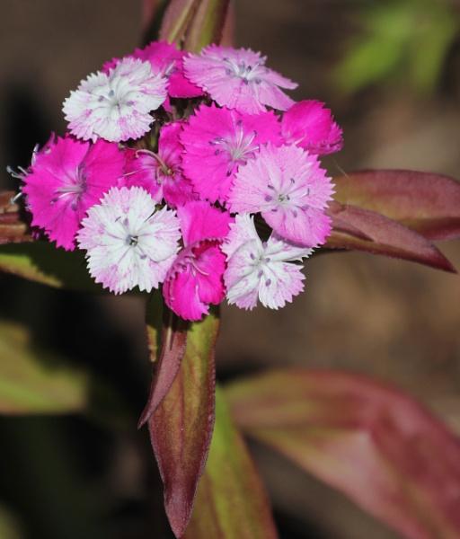 Spiritual Pink by tonyguitar