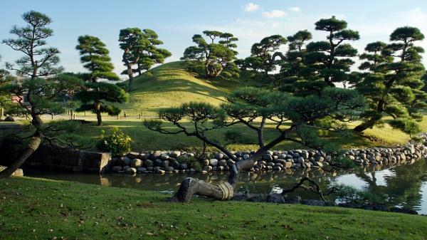Japanese pine trees by prtd