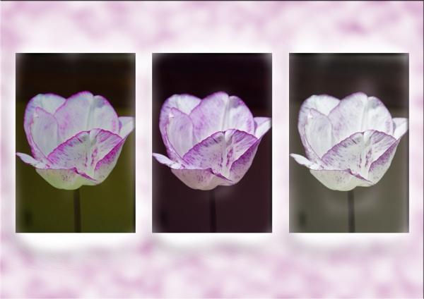 triptych by bornstupix2