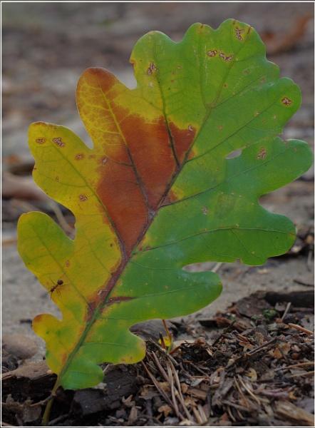Autumnal Gleam Series #93 by PentaxBro