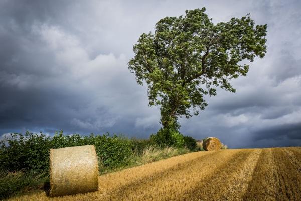 The Hay Field by Billdad