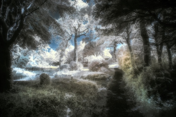 A garden in Netley,  Hampshire. Infrared by frenchie44