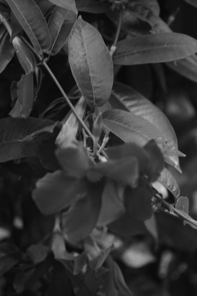 "~ \""Monochrome Botanical II\"" by LexEquine"