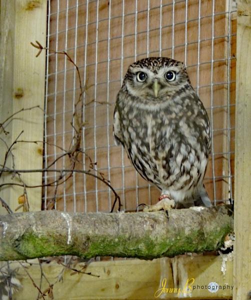 Burrowing Owl by jb_127