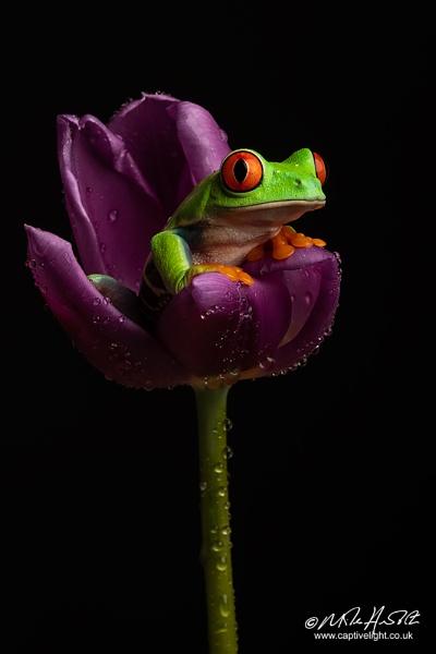 Flower Frog by Miles Herbert