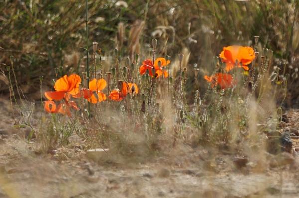 Flowers of Crete 3