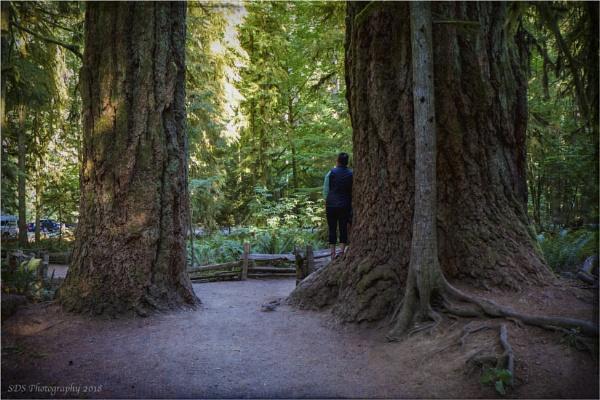A Really Big Tree by Daisymaye