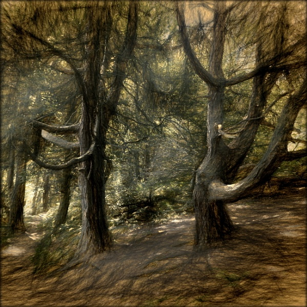Lost in the Darkwood Forest