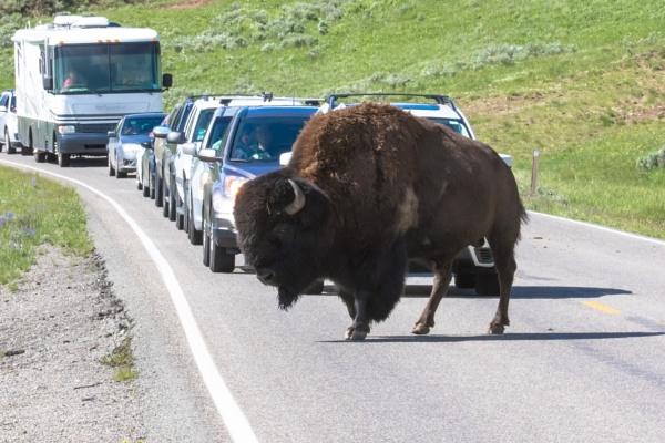 Yellowstone (35) by Trekmaster01