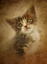 Kitten by clintnewsham