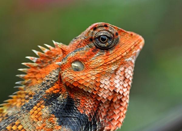 Looking into its eyes... by kingmukherjee