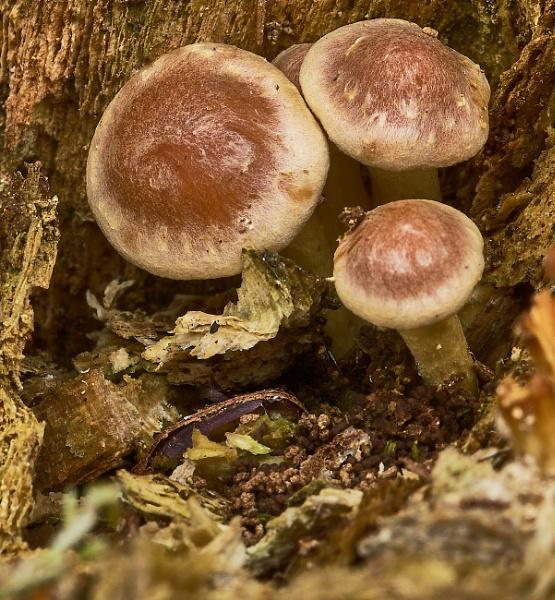 Fungi by JJGEE