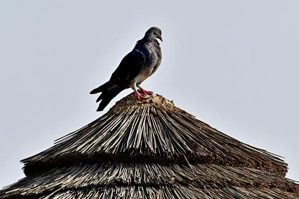 Roof Top visitors by Savvas511