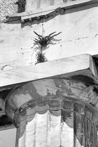VEGETATION ON THE ARCHITRAVE by dimalexa
