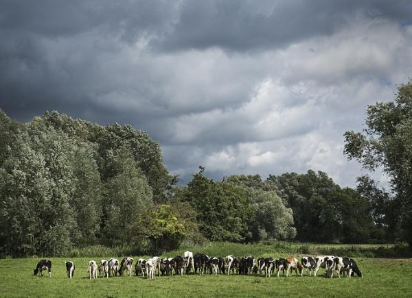 Spot the Bull by AlfieK