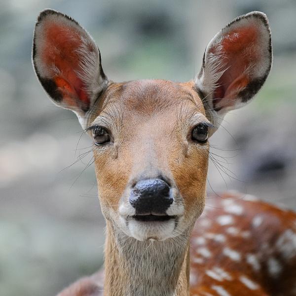 Ears Up! by HoiPolloi