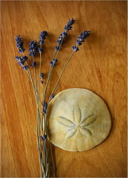 Sand Dollar & Lavender by MalcolmM