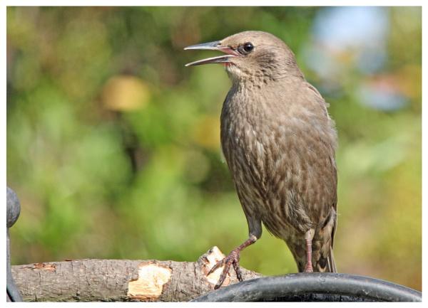 Garden birds by davidgibson