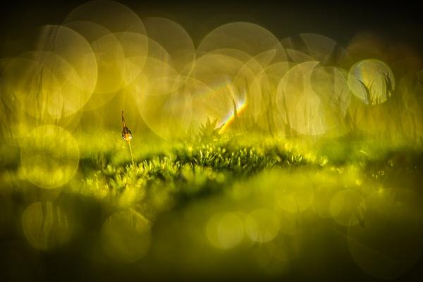 Moss Capsule by barrywebb