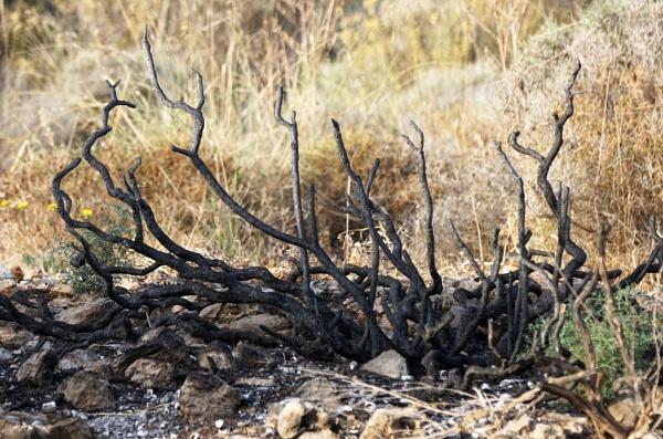 Burnt Embers