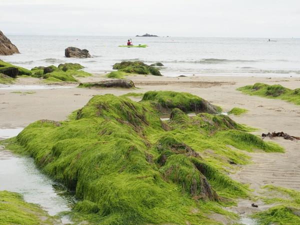 Greens on the beach