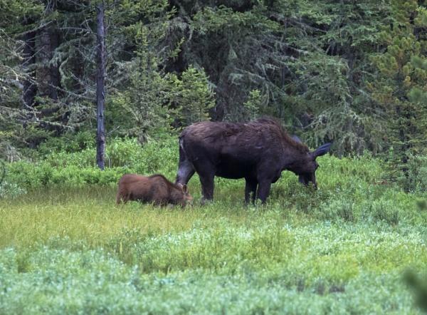 Yellowstone (38) by Trekmaster01