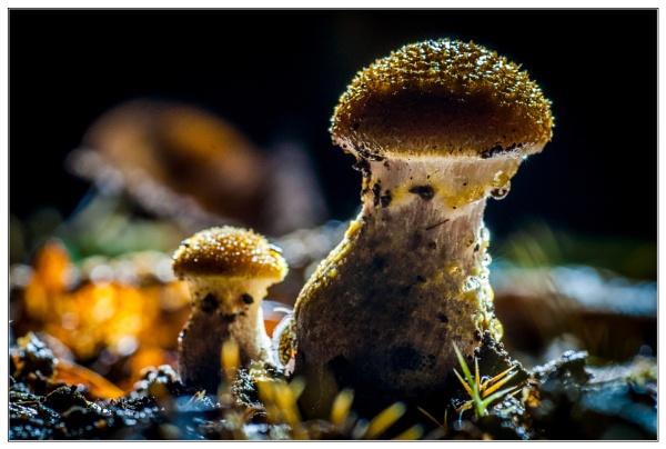 Fungi by EddieAC