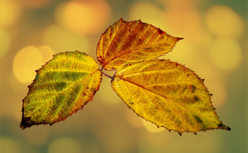 """""""Leaves in Autumn""""."""