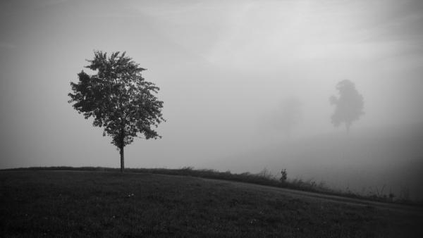 morning fog by matkaspa