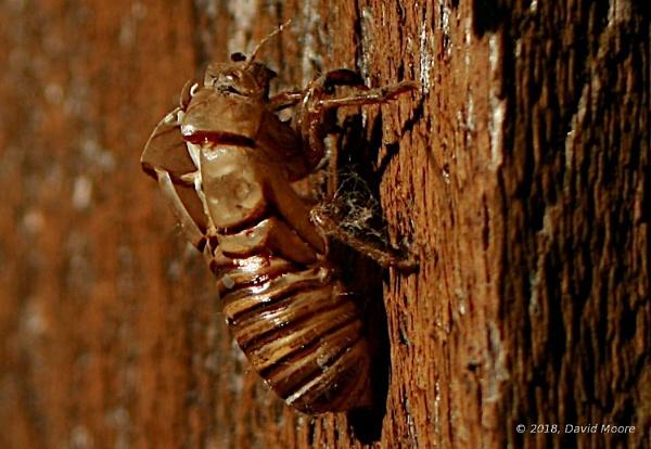 Cicadas by youcantoo