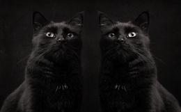 Photo : Black Cats - Sunderland