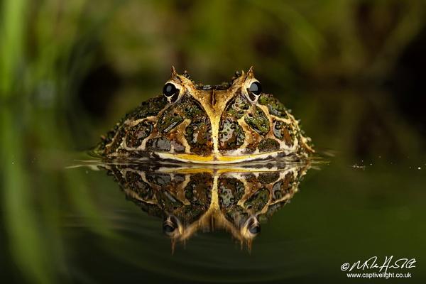Pondlife ... by Miles Herbert