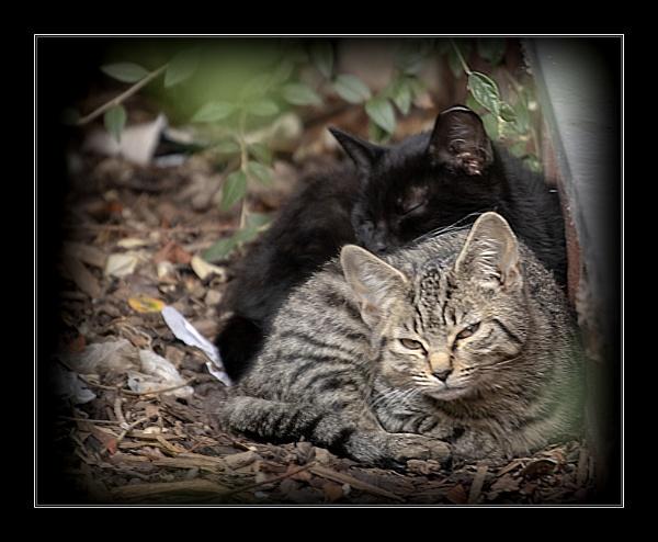 Feral Cats by r0nn1e