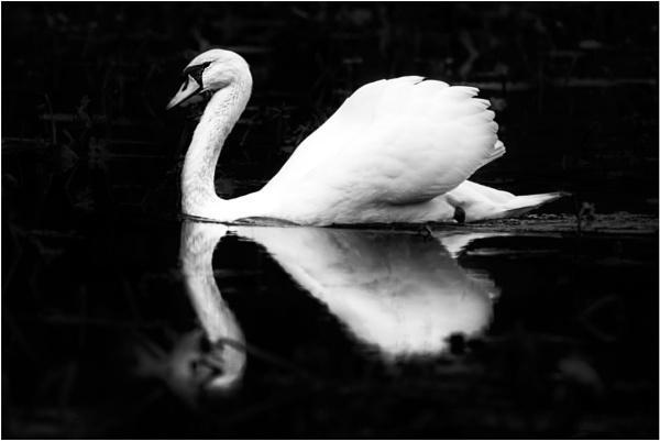 Graceful Reflection by Eddie91
