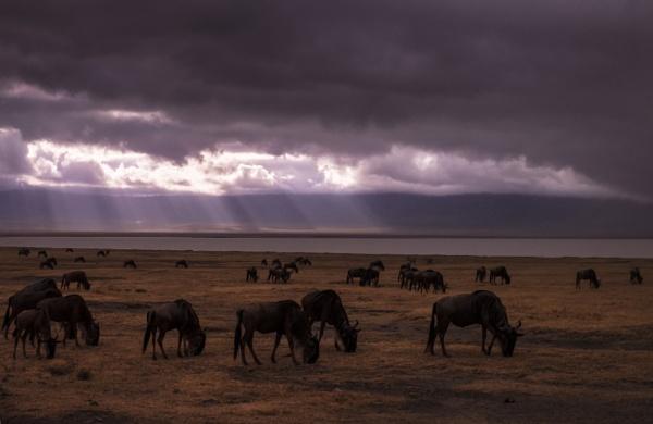 Ngorongoro morning by rnomis
