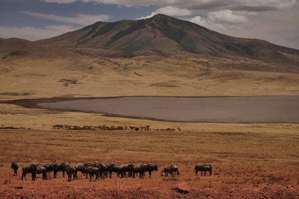 Serengeti plain by rnomis