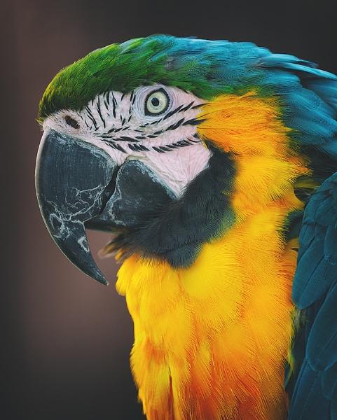 Macaw by MartinWait