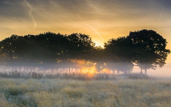 Morning by IgorCsmd