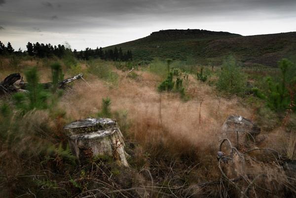 Whispering Grass by Trevhas