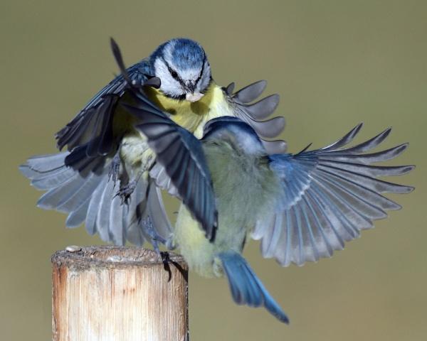 A minor skirmish! by Holmewood
