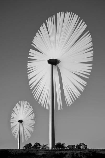 Wind Flowers by flowerpower59