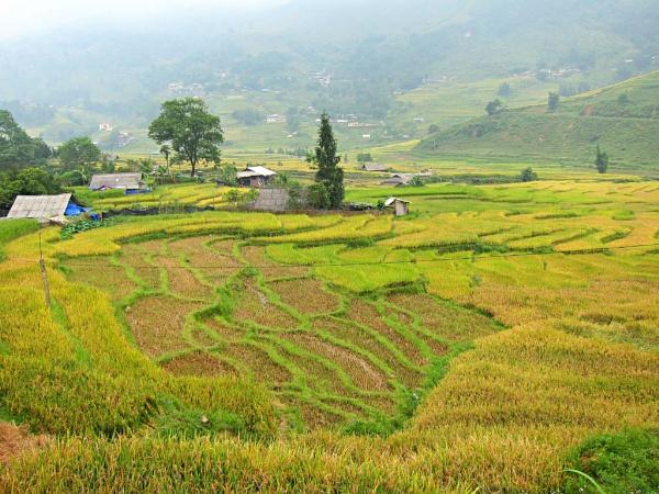 Sapa - Rice Harvest has Begun by MaryFaith