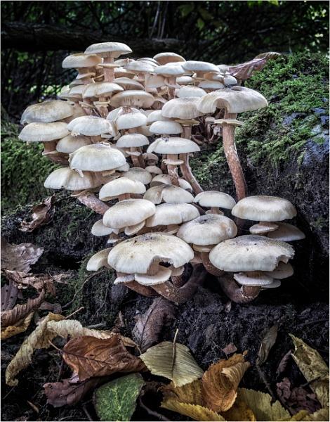Mushrooming by Somerled7