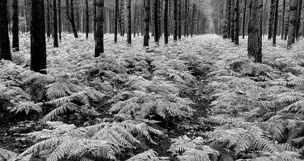 Walk in the Woods by Zydeco_Joe