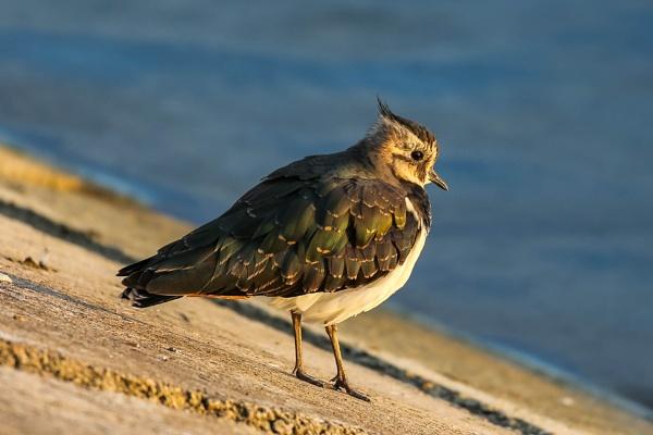 unknown bird by michaelo