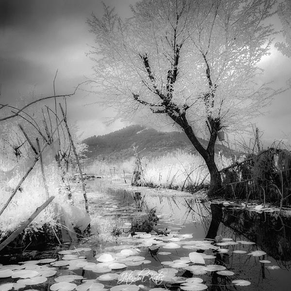 Dal lake in monochrome by drjskatre