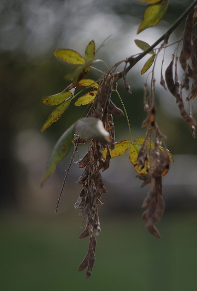 Dull October by bobby55