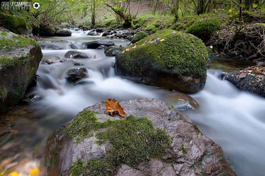 An Autumnal Flow