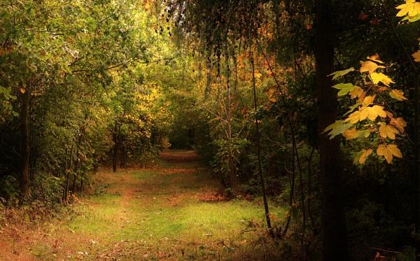 Early Autumn woodland landscape. by georgiepoolie